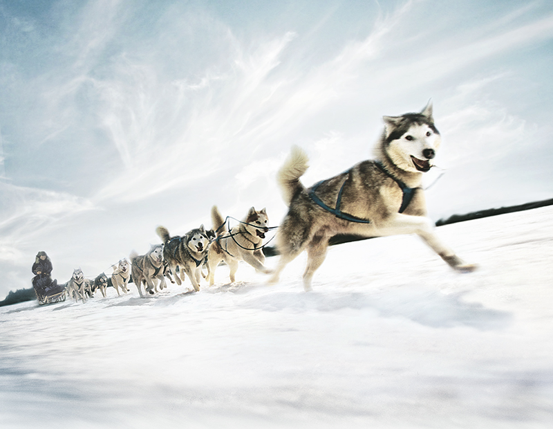 Dogsledding in Maine
